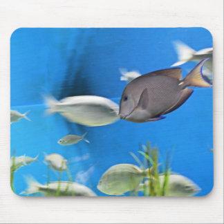Blue Tang Fish Mousepad