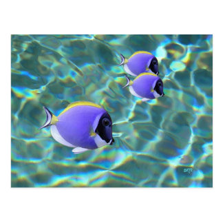 Blue Tang Fish on Sparkling Water Postcard
