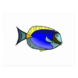 Blue Tang Fish Postcards