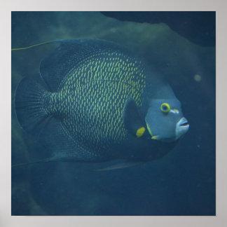 Blue Tang Fish Print