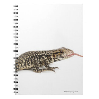 Blue tegu - Tupinambis merianae Notebook