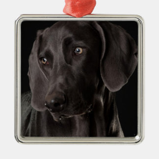 Blue the Weimaraner Christmas Tree Ornament