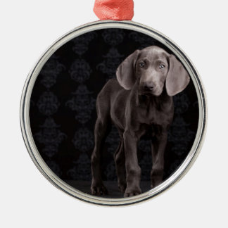 Blue the Weimaraner Puppy Christmas Ornaments