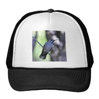 Blue Throated Hummingbird Trucker Hats