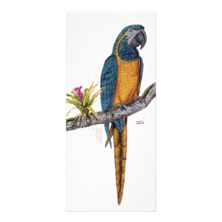 Blue Throated Macaw Rack Card Design