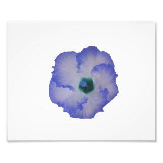 Blue tinted hibiscus flower photo print