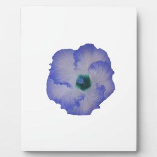 Blue tinted hibiscus flower plaque