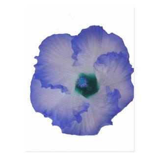 Blue tinted hibiscus flower postcard
