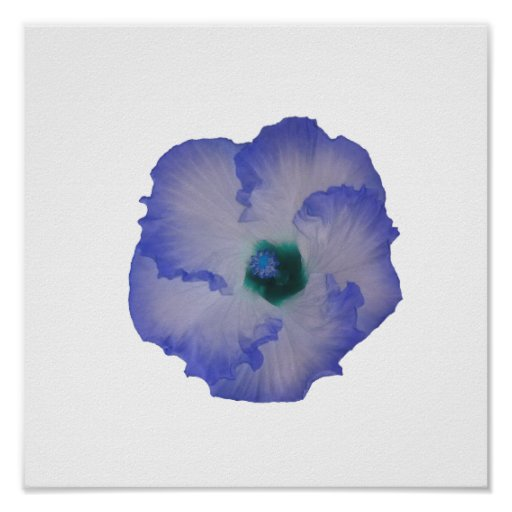 Blue tinted hibiscus flower poster