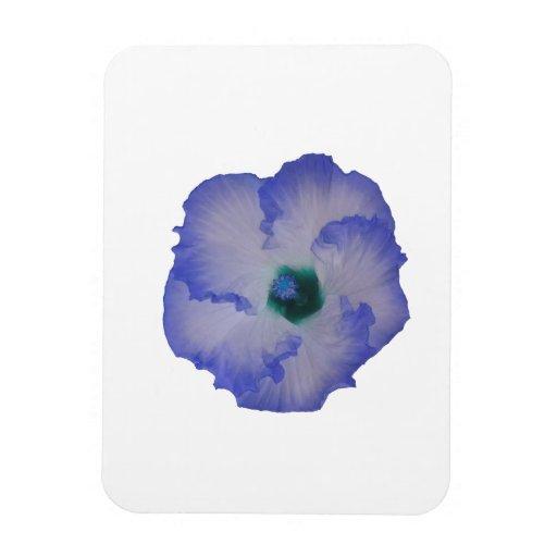 Blue tinted hibiscus flower vinyl magnet