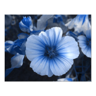 Blue Tinted Lavatera Card