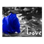 Blue tinted rose on silver back with Love text Postcards