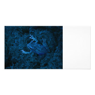 Blue tinted tree frog moss amphibian animal photo card