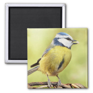 Blue tit bird 2 inch square magnet