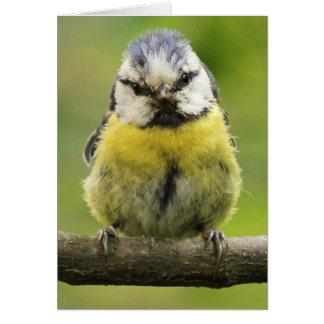 Blue Tit bird Card