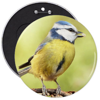 Blue tit bird pinback button