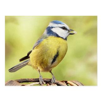 Blue tit bird postcard