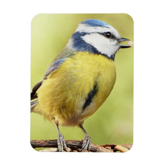 Blue tit bird rectangular photo magnet
