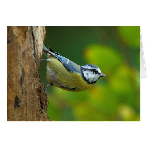 Blue Tit in the autumn greeting card