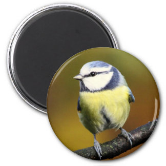 Blue tit sitting on a branch 2 inch round magnet