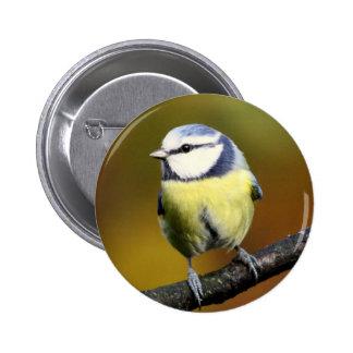 Blue tit sitting on a branch pinback button