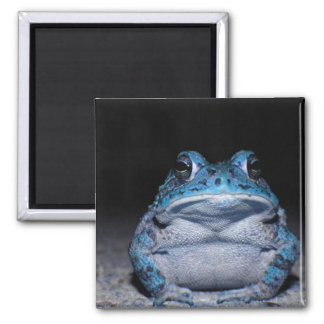 Blue Toad 2 Inch Square Magnet