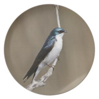 Blue Tree Swallow Plate