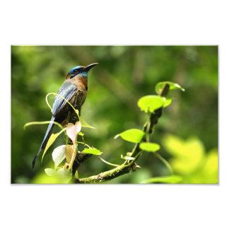 Blue Tropical Bird Photo Print