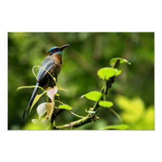 Blue Tropical Bird Posters