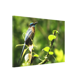 Blue Tropical Bird Stretched Canvas Prints