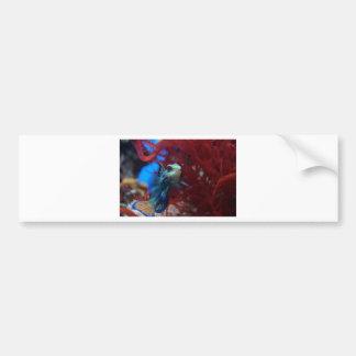 Blue tropical fish bumper sticker