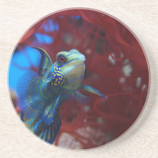 Blue tropical fish drink coaster