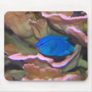 Blue Tropical Fish Mouse Pad