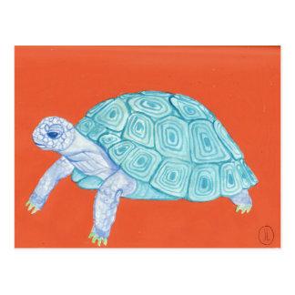 Blue Turtle Postcard