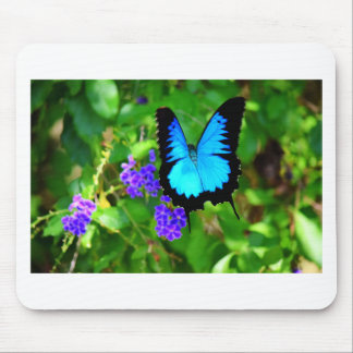 BLUE ULYSSES BUTTERFLY QUEENSLAND AUSTRALIA MOUSE PAD