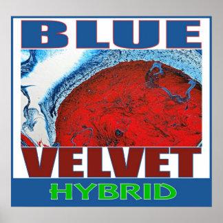 BLUE VELVET HYBRID POSTER