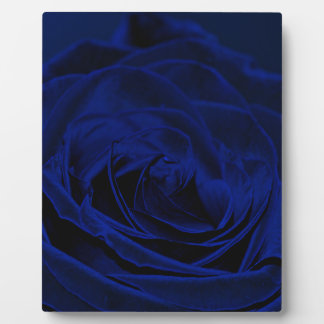 Blue Velvet rose.jpg Plaque