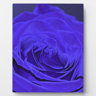 Blue Velvet Rose Plaque