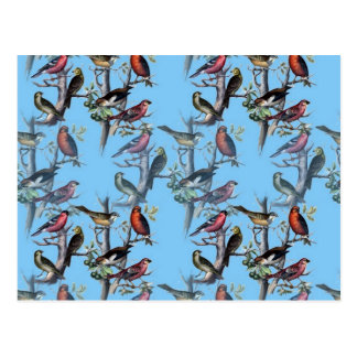 Blue Vintage Art Birds pattern accessories LeahG Postcard