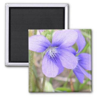 Blue Violet Flower 2 Inch Square Magnet
