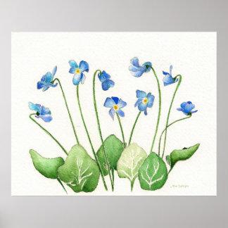 Blue Violets  Poster Print