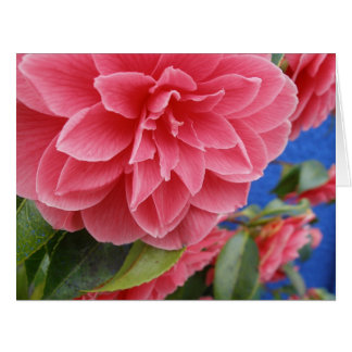 Blue Wall Camellias Mother's Day Greeting Card
