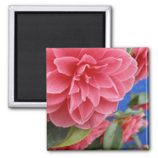 Blue Wall Pink Camellia Magnet