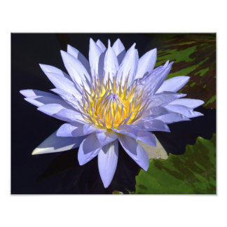 """Blue Water Lily 14"""" x 11"""" Photo Print"""