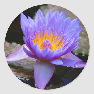 Blue Water Lily Round Stickers