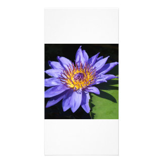 Blue Waterlily Photo Card