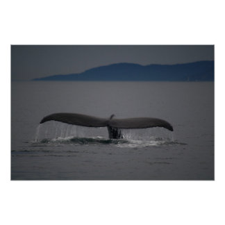 Blue Waters - Humpback Whale Tail Poster