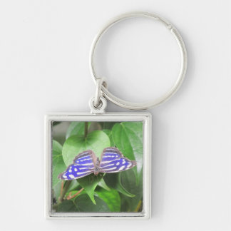 Blue Wave Butterfly Keychain