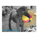Blue Weimaraner Puppy playing Postcards