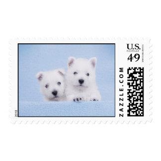 Blue Westie Stamp
